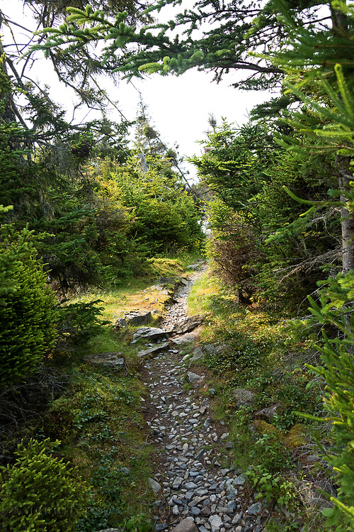 Trail to the ferry dock at the Duck Harbor campground, Acadia National Park, Isle au Haut, Maine.