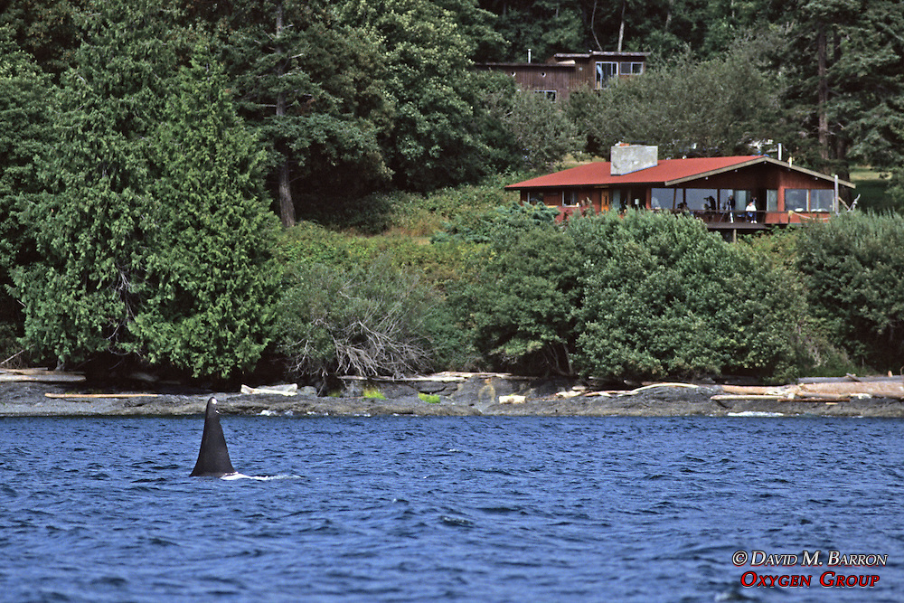 Orca & Center For Whale Research