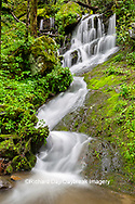 66745-04808 Waterfall along the  Middle Prong Little River in spring Great Smoky Mountains National Park TN