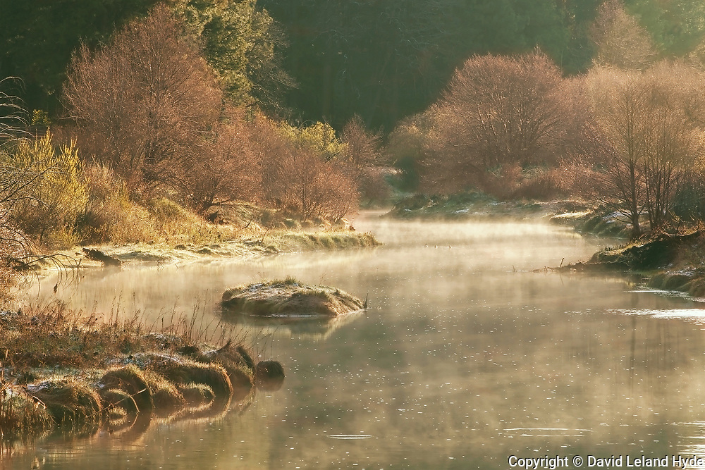 Early Morning, Indian Creek Above Little Grizzly Creek, Genesee Valley, Willows, Cottonwoods, Tuft Grass, Mist, Fog, Fir Forest, California Mountains, Ponderosa Pine