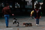 Oncoming pet dog owners pass-by each other on London's Southbank.