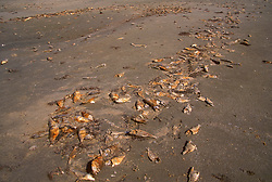 Stock photo of dead fish washed ashore