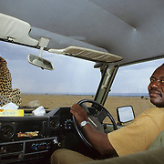 A driver from Masai Mara River Camp waits while a cheetah scopes the area.