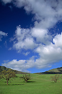 Oaks trees and rolling hills, Tassajara Region, Contra Costa County, CALIFORNIA