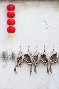 Duck meat hanging against white wall while drying and Chinese lanterns, Xidi village, UNESCO World heritage, Anhui province, China
