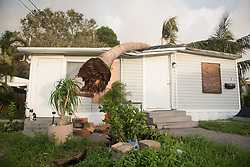 September 11, 2017 - Dania Beach, Florida, U.S - A mobile home in Dania Beach, Fla. damaged by a tree  struck down by the strong winds of Hurricane Irma. (Credit Image: © Orit Ben-Ezzer via ZUMA Wire)