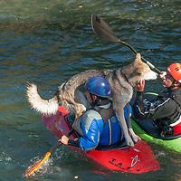 Kayakers Paul Manning-Hunter & David Manning briefly host their dog atops their kayaks in the Kananaskis River near Calgary, Alberta, Canada.