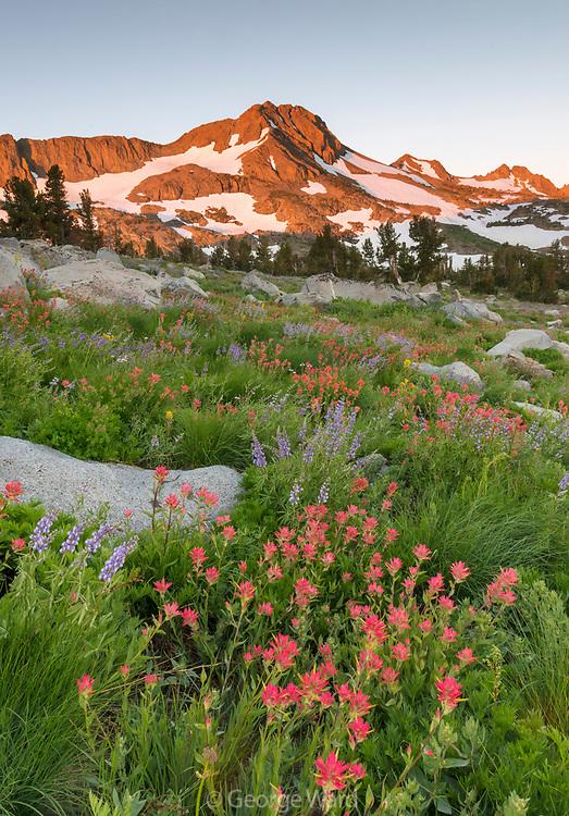 Dawn Light on Mountain with Paintbrush, Grasses and Rocks, Mokelumne Wilderness, Eldorado National Forest, California