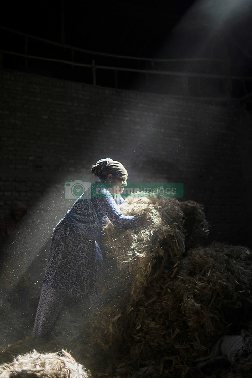 November 1, 2018 - Narayanganj, Bangladesh - Sun rays enter through the rooftop while Jute mill worker sorting out small pieces of jutes..Bangladesh used to be known for it's Jute. In recent years Bangladesh and many other country considering jute as the new possibilities to replace many daily goods and make bags out of jute to replace plastics. (Credit Image: © Ziaul Haque Oisharjh/SOPA Images via ZUMA Wire)