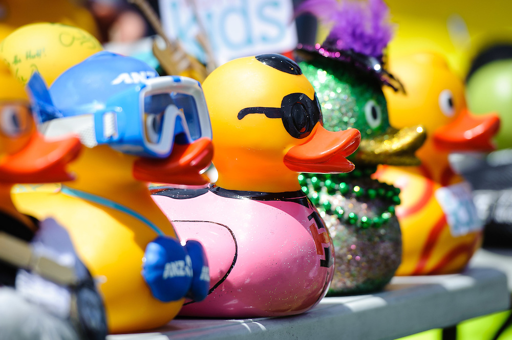 WELLINGTON, NEW ZEALAND - November 30:  Ducks in a row ready for their race in the Hutt River Festival November 30, 2014 in Ewan Bridge, Hutt City, New Zealand.  Interislander River Festival.  (Photo by Mark Tantrum/ real-people.co.nz)