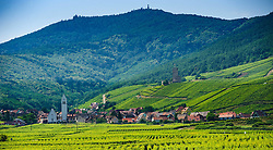 Vinyards around the village of Katzenthal in the foothills of the Vosges mountains in Alsace, France<br /> <br /> (c) Andrew Wilson | Edinburgh Elite media