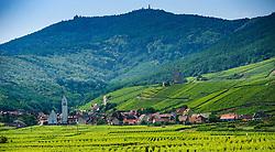 Vinyards around the village of Katzenthal in the foothills of the Vosges mountains in Alsace, France<br /> <br /> (c) Andrew Wilson   Edinburgh Elite media