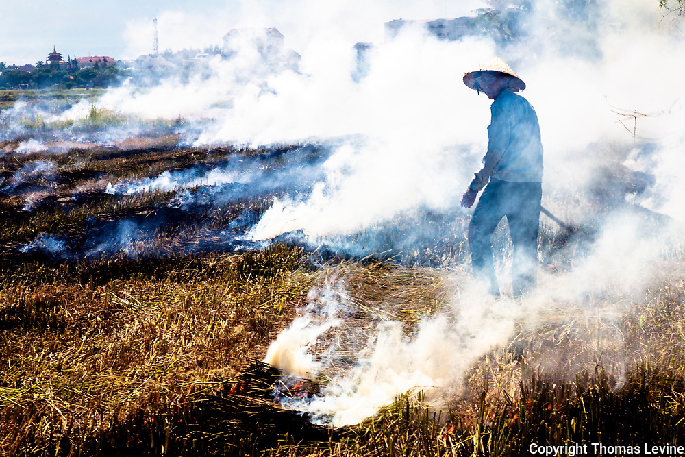Hoi An Rice farmer turns to look as his field burns and the wind blows the smoke down wind.