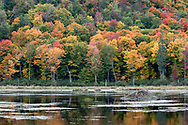 A beaver lodge at the Beaver Pond during a great fall foliage display in Gatineau Park, Québec, Canada.  Photographed from the Gatineau Parkway during the Fall Rhapsody festival at Gatineau Park.