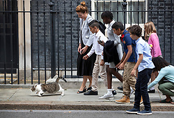 © Licensed to London News Pictures. 30/08/2019. London, UK. Larry the Downing Street cat makes a run for it as school children attempt to stroke him. The government has asked the Queen to suspend Parliament in the days after MPs return to work in September - a few weeks before the Brexit deadline of October 31st. Photo credit: Peter Macdiarmid/LNP