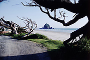 CS01111-10. Cannon Beach, Windswept Fir Trees, May 1969