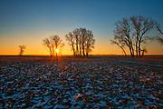 Plains cottonwood tree at sunrise. Grande Pointe. Manitoba. Canada<br />Grande Pointe<br />Manitoba<br />Canada