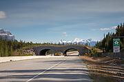 Wildlife bridge in Banff National Park, ALberta, CA.