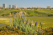 Fashion Island from Across the Back Bay Newport Beach, California