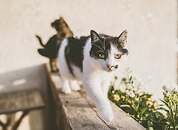 THEMENBILD - zwei Katzen auf einem Holzbalkon mit Balkonblumen, aufgenommen am 01. Juni 2019, Kaprun, Österreich // two cats on a wooden balcony with balcony flowers on 2019/06/01, Kaprun, Austria. EXPA Pictures © 2019, PhotoCredit: EXPA/ Stefanie Oberhauser