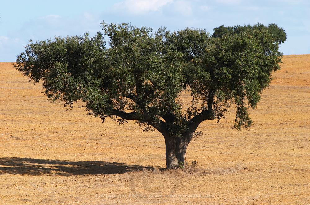 dry fields with oak trees herdade da malhadinha nova alentejo portugal