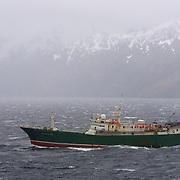 A small ship makes it's way up   A small ship makes it's way up Garibaldi Fjord, Argentina