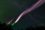 A Strong Emission Velocity Enhancement visits Glacier Bay on the night of August 30, 2019. Steve is a strip of ionized gas moving through the air at about four miles per second, with temperatures as high as 10,800 degrees Fahrenheit - as hot as the earth's core. It is about 16 miles wide and thousands of miles long, flowing from east to west.