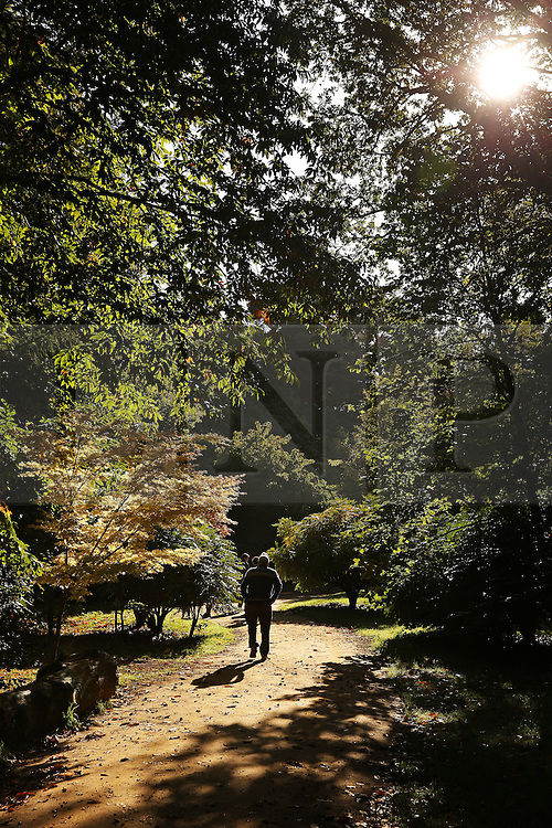 © Licensed to London News Pictures. 08/10/2015. Godalming, UK. Early morning sun shines through the trees at Winkworth Arboretum.  Photo credit: Peter Macdiarmid/LNP