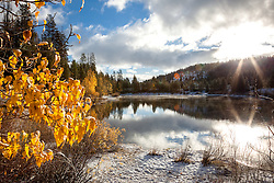 """""""Snowy Coldstream Pond 1"""" - This yellow leaved Cottonwood tree was photographed at a snowy Coldstream Pond in Truckee, California."""