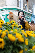 An Asian woman takes a photo of sunflowers using her mobile phone at Columbia Road Flower Market on the 6th October 2019 in London in the United Kingdom. Columbia Road Flower Market is a street market in Bethnal Green in Hackney, London. The market is open on Sundays only.