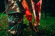 Standing with a bloodied knife and hand is an instructor of a special US Air Force (USAF) survival course (see also Corbis image 42-18212808) who has butchered a deer near their facility at Fairchild AFB, Spokane, Washington State. The man teaches escape and evasion techniques to visiting air crew whose flying careers depend on passing this rigorous week of survival instruction. Should they be downed in hostile territory for example, they will need every skill learned here to survive possibly weeks being hunted in the wilderness so trapping and preparing fresh meat for human consumption is important for survival. Here the teachers stand around the venison which is strung up on a branch, its intestines and organs already removed by a hunting knife.