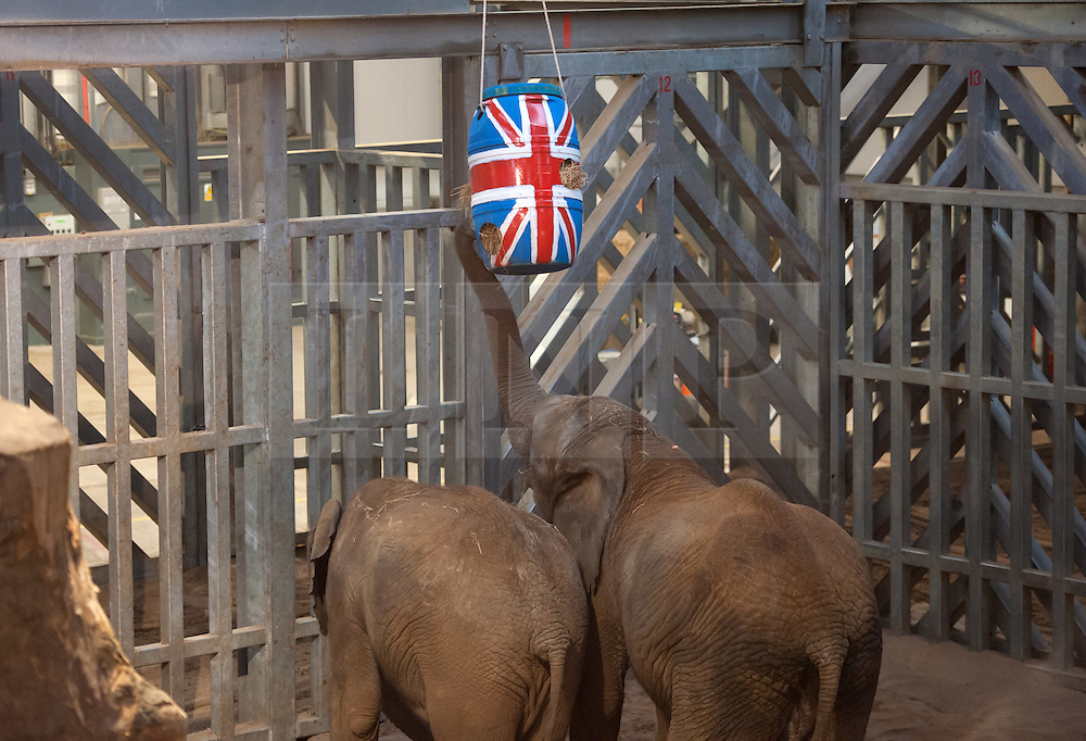 """© Licensed to London News Pictures. 17/12/2015. Wraxall, North Somerset, UK.  The Princess Royal, Princess Anne, opens 'Elephant Eden' and elephant play zone at Noah's Ark Zoo Farm in Bristol. HRH The Princess Royal officially opened the 20 acre Elephant Eden habitat – the largest of its kind in northern Europe. Described as a """"five star hotel for elephants"""" by international elephant management specialist Alan Roocroft, Elephant Eden saw the arrival of its first African elephant in 2014 and has had finishing touches to the complex completed this year along with the arrival of further elephants. Now home to two characterful bull elephants Janu and M'Changa, Elephant Eden has been celebrated as offering welfare improvements to the industry and has been used as a helpful model for other collections to base their own building plans on, including international zoo colleagues from as far afield as Japan.<br />  Noah's Ark will also unveil its new Elephant Play Zone for children next to the elephant barn, which will include an impressive 4m high scale model elephant with built-in slide.<br /> Photo credit : Simon Chapman/LNP"""
