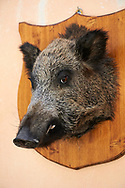 Wild boar heads outside a typical Norcineria shop, Norcia, Umbria, Italy