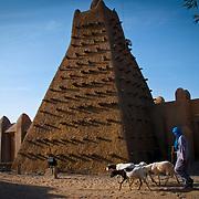 Sankoré mosque.Built in 15th-16th centuries . Timbuktu city. Timbuktu region. Mali.