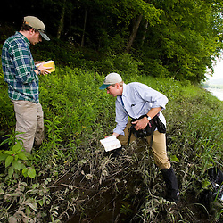 Nature Conservancy employees cut back Japanese Knotweed in an invasive species eradication effort on the TNC's Silverweed Seep preserve in Plainfield, New Hampshire.