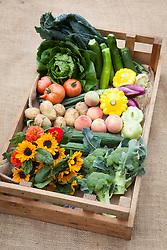Harvested box of produce. Cavalo Nero, Lettuce 'Little Gem Maureen', Courgette 'Nero di Milano', Summer squash Pattypan, Onion 'Long Red Florence', Tomato 'Berner Rosen', Peach 'Peregrine', Potato 'Maris Peer', Cucumber 'Styx F1', Helianthus 'Sonja', Zinnia 'Giant Dahlia Mix', Broccoli 'Belstar'