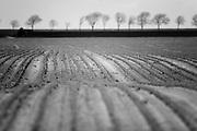 Rolling fields // Golvende akker.