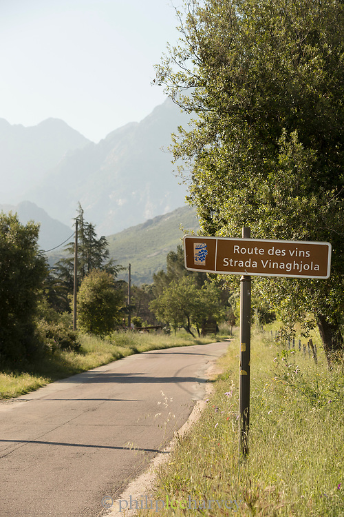 Road sign by road and trees, Route des Vins de Balagne, Corsica, France