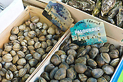 Live clams, cockles and oysters, palourdes, coque, huitres, on sale at food market at La Reole in Bordeaux region of France