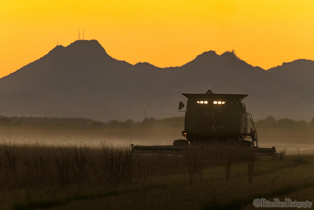 Charlie Matthews Harvests rice on Loma Rico Road in Marysville, Wednesday, September 29, 2021.<br /> Photo Brian Baer