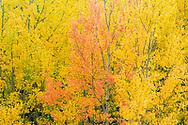 The standout, Autumn Colours, Waterton Lakes National Park