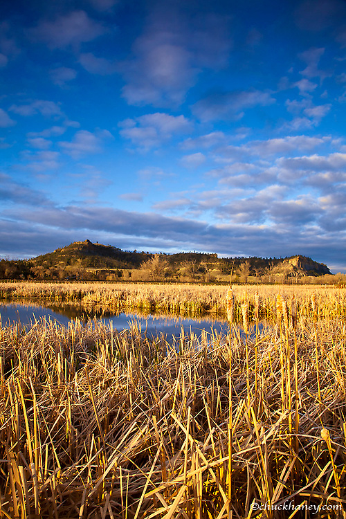 Wetlands pond in morning light near the Yellowstone River in Park City, Montana, USA