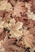 Autumn leaves photo art design