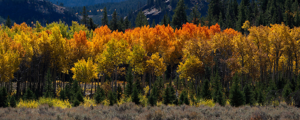 A group of trees along the Chief Joseph scenic Byway show off their fall colors.