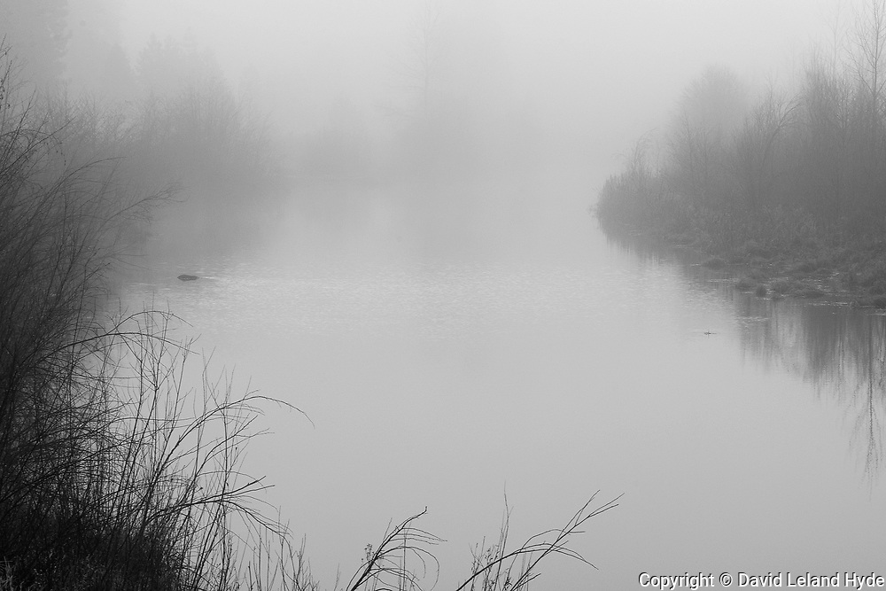 Indian Creek, Mist, Fog, Taylorsville, California Mountains, Black and White Art, Black and White Photography, Abstract Photography, Reeds, Cattails, Cottonwoods, Willows