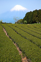 Shizuoka accounts for 45% of Japan's overall green tea production, and the prefecture is at the leading-edge of research with regards to the benefits that can be obtained from green tea.
