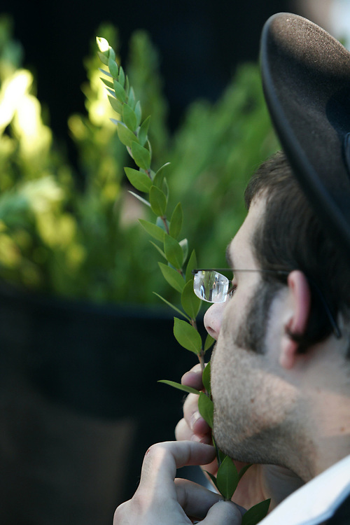An Ultra Orthodox Jewish man inspect a Hadass (boughs with leaves from the myrtle tree), one of the Four Species which will be used during the celebration of the Sukkot (Tabernacles) holiday, in Jerusalem, on September 24, 2007. The word Sukkot is the plural of the Hebrew word sukkah, meaning booth or hut. The sukkah is reminiscent of the type of thatched huts in which the ancient Israelites dwelt during their 40 years of wandering in the desert after the Exodus from Egypt. Throughout the holiday, meals are eaten in the sukkah, and some families sleep there and a blessing is recited every day over the Four Species.