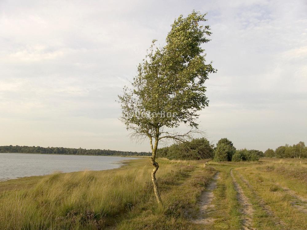 tree in grassland landscape Holland