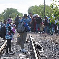 Illegal migrants walk on railway tracks after they crossed the border between Hungary and Serbia near Roszke (about 174 km South of capital city Budapest), Hungary on September 07, 2015. ATTILA VOLGYI