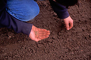 AE2BX7 Child planting carrot seeds in soil